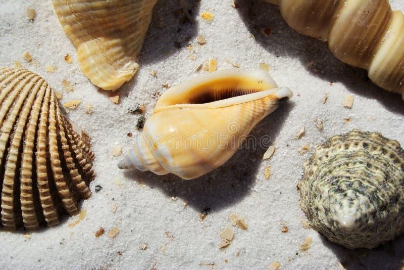 Ein Bündel Seeshells im Sand lizenzfreie stockfotos