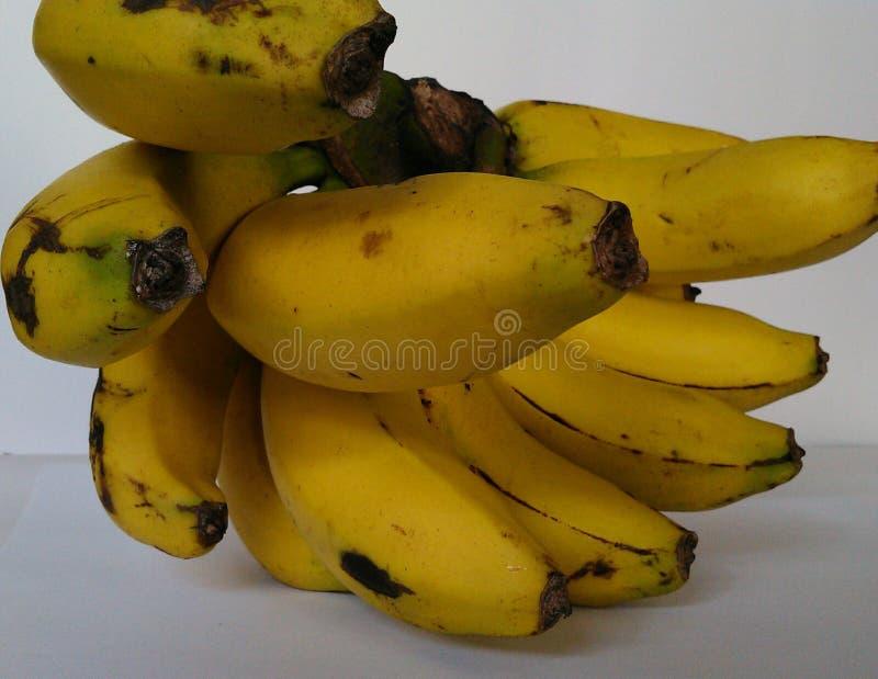 Ein Bündel tropische Bananenfrucht lizenzfreies stockbild