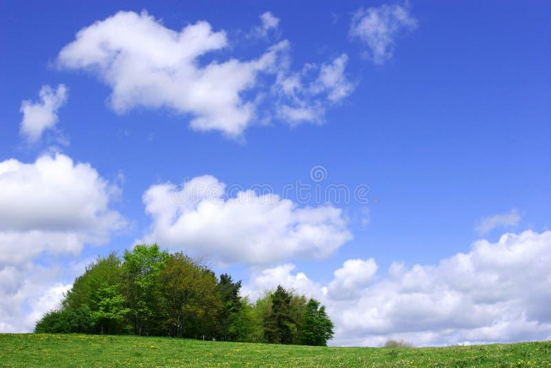 Ein Büschel der Bäume im Frühjahr stockfoto