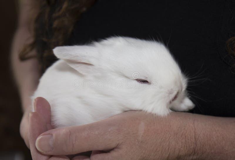 Ein Baby-Weiß-Kaninchen lizenzfreies stockfoto