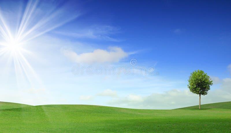 Ein Baum auf grünem Feld lizenzfreies stockbild