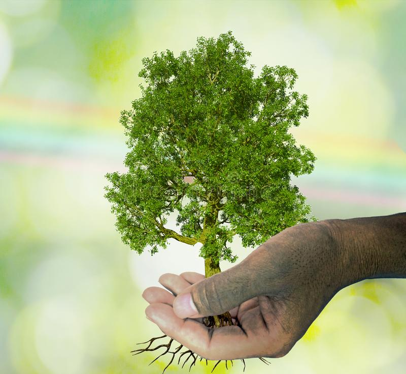 Ein Baum in den Handwachsenden Sämlingen Bokeh-Grün und Regenbogen Backgroun vektor abbildung