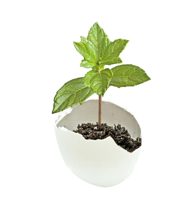 Ein Baum, der vom Ei ausbrütet lizenzfreies stockfoto