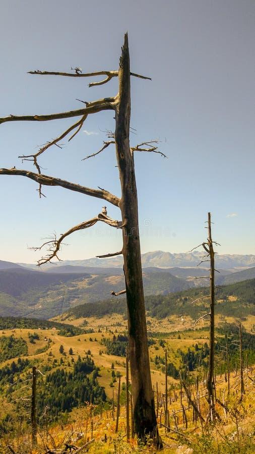 Ein Baum gebrannt durch verheerendes Feuer lizenzfreie stockbilder
