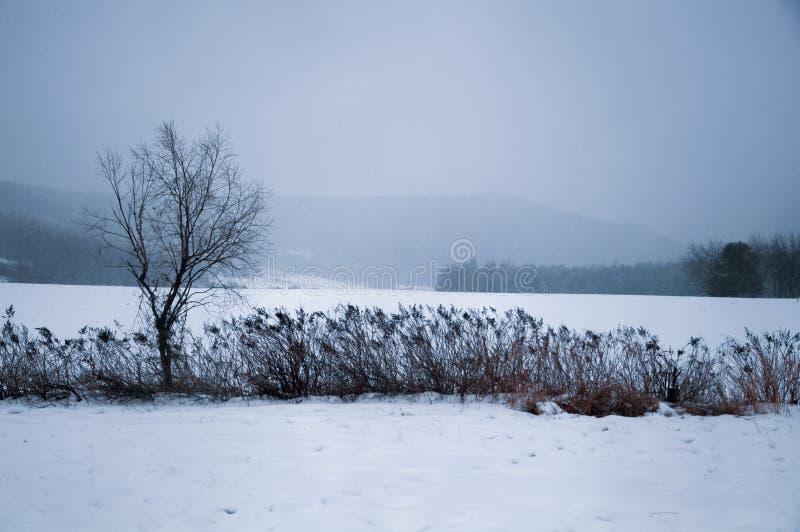 Ein Baum im Schneefeld lizenzfreies stockbild