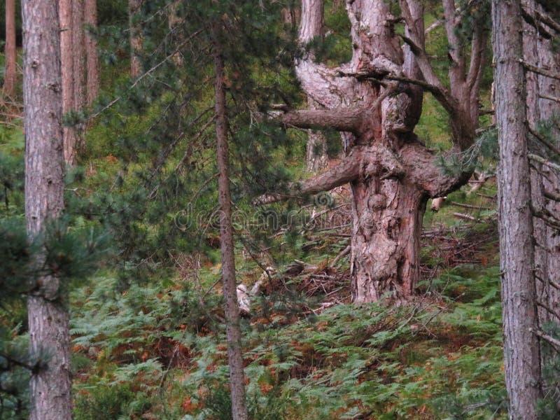 Ein Baum lächelt am Wald lizenzfreie stockfotos