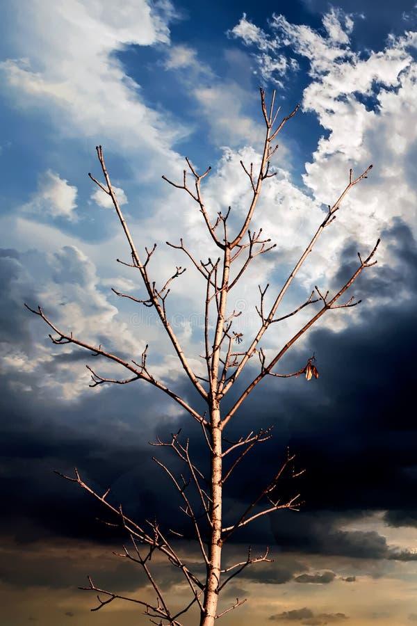 Download Ein Baum Und Ein Blauer Himmel Stockbild - Bild von nave, tageslicht: 106801405