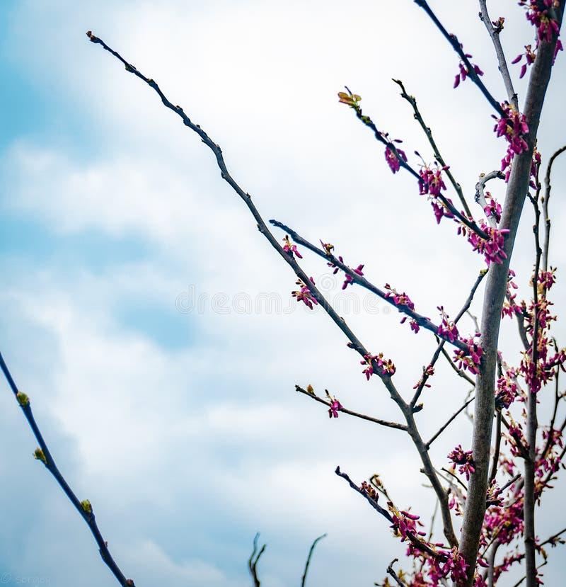 Ein Baumast mit interessanten Blumen stockfotografie