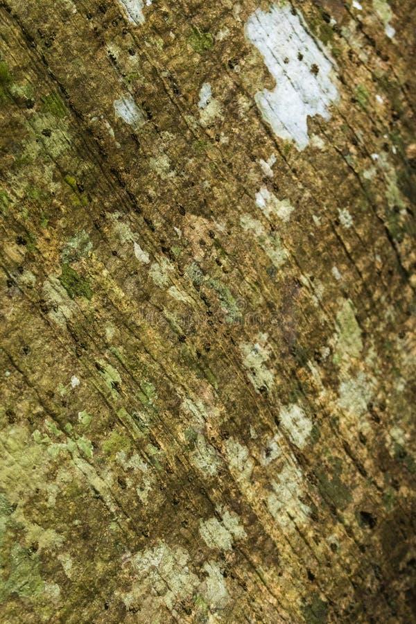 Ein Baumstamm mit diagonalen Linien stockfotografie