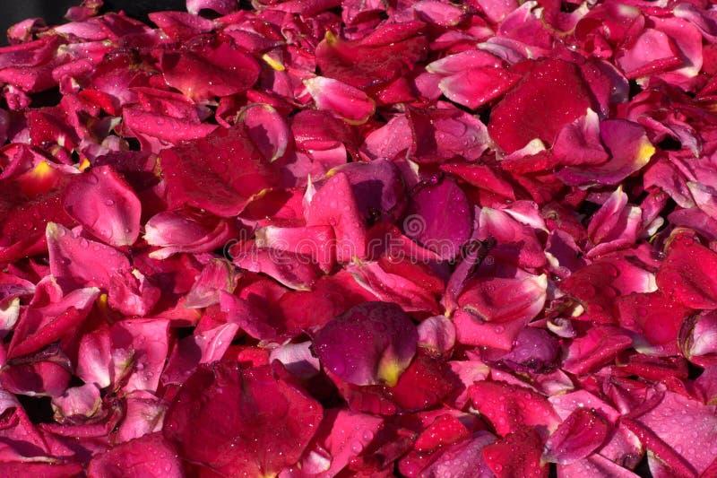Ein Bett von rosafarbenen Blumenblättern, für unsere Liebe lizenzfreie stockfotografie