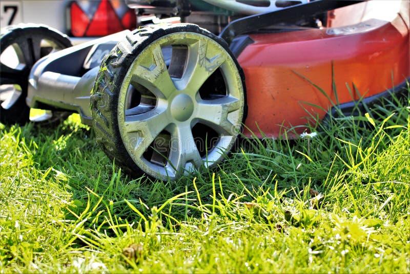 Ein Bild eines Rasens, der, arbeitend mäht im Garten stockbild