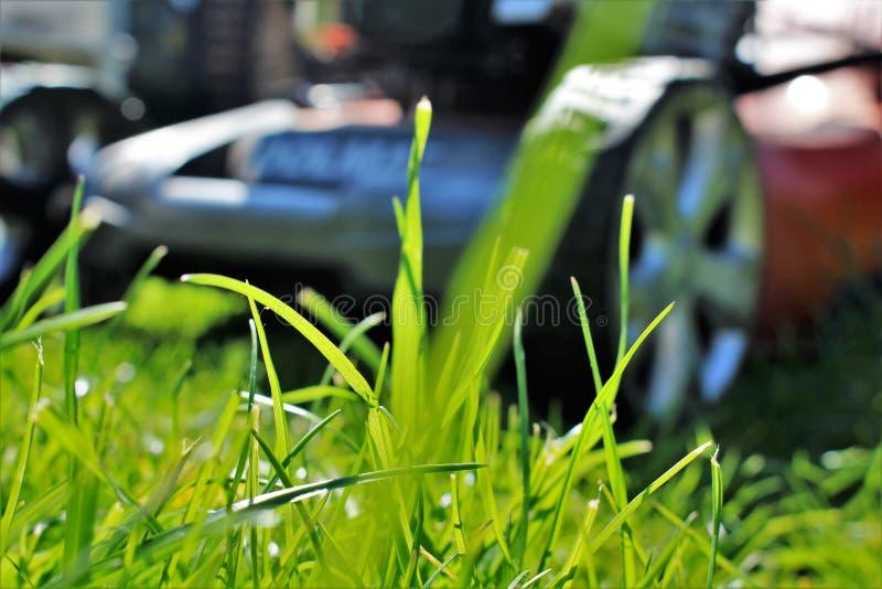 Ein Bild eines Rasens, der, arbeitend mäht im Garten stockbilder