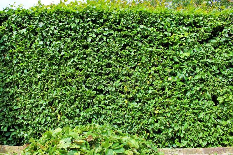 Ein Bild von Zutaten einer Hecke, arbeitend im Garten lizenzfreie stockbilder