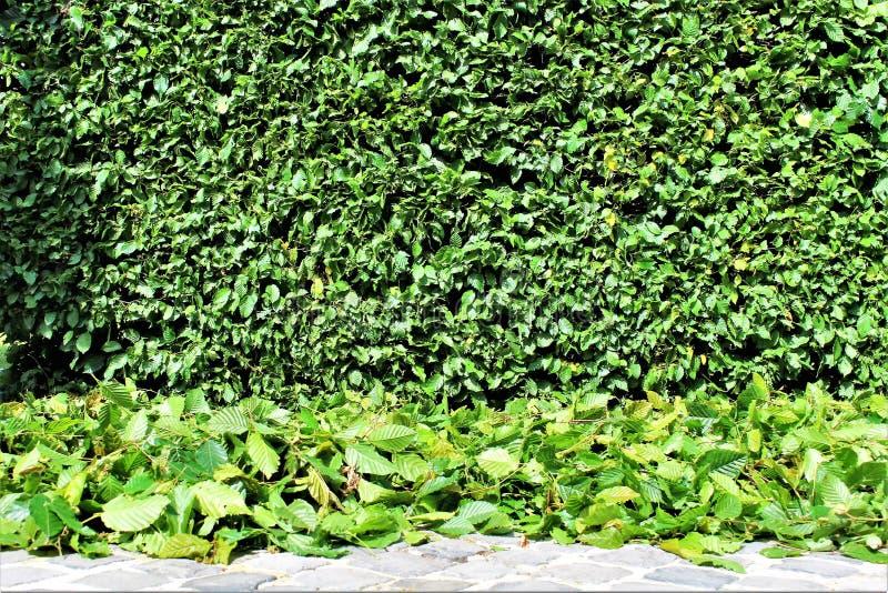 Ein Bild von Zutaten einer Hecke, arbeitend im Garten stockbilder