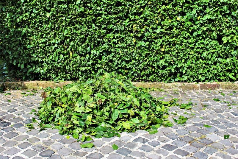 Ein Bild von Zutaten einer Hecke, arbeitend im Garten lizenzfreies stockfoto