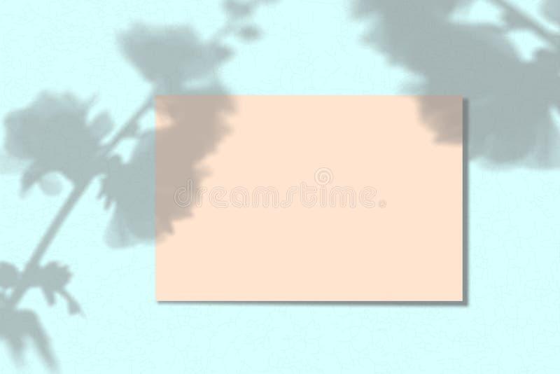 Ein Blatt Papier auf einem blauen Hintergrund Plan mit der Auferlegung von Betriebsschatten Natürliches Licht wirft einen Schatte stockfoto