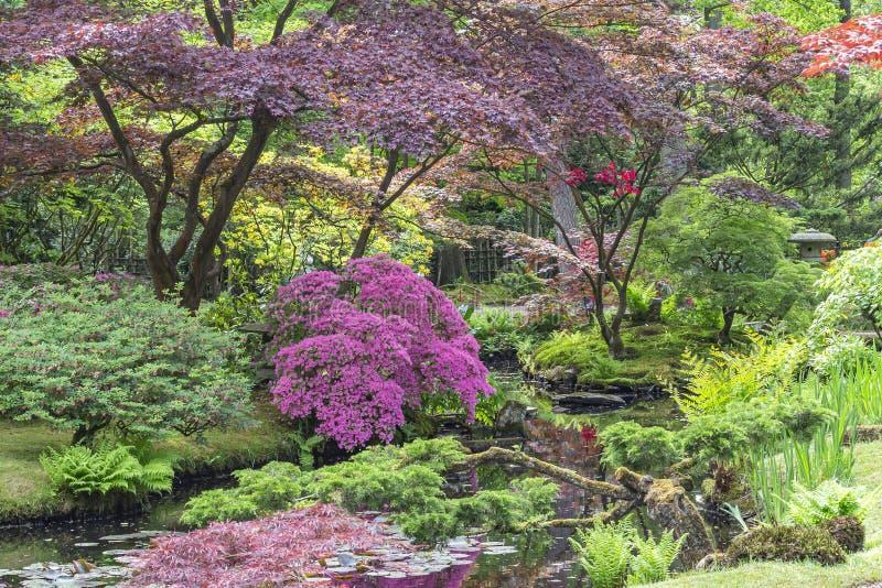 Ein Blick über einem Strom mit Azaleen, Farnen und acers zu einem Bild einer Pagode im japanischen Garten im Park Clingendael, De stockbild