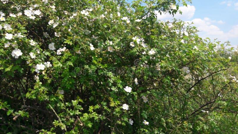 Ein Blumenbaum stockfotos