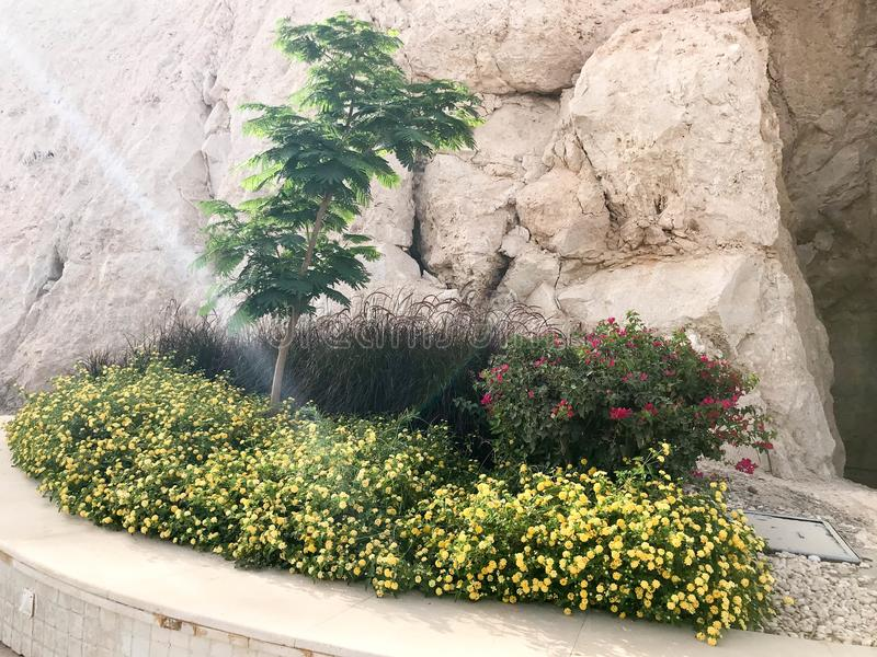 Ein Blumenbeet mit einem Steinzaun mit einem kleinen grünen Baum und gelben Blumen auf einem Steinwandhintergrund auf einem Berga lizenzfreies stockfoto