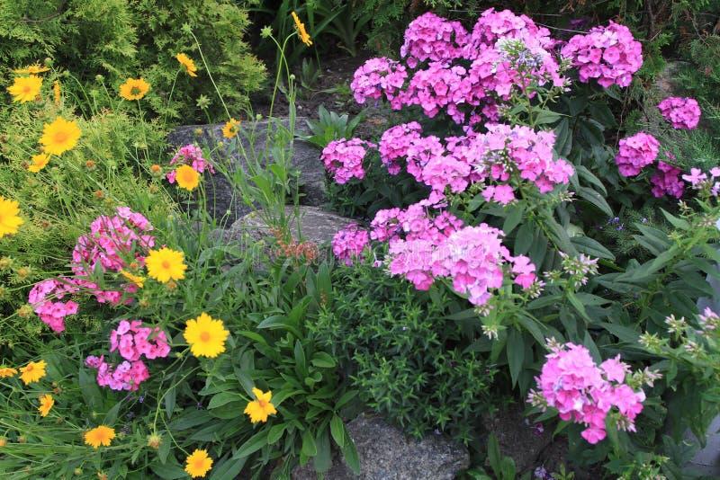Ein Blumenbeet mit Flusssteinen des dekorativen Steins und schönen kleinen rosa und orange Blumen stockbild
