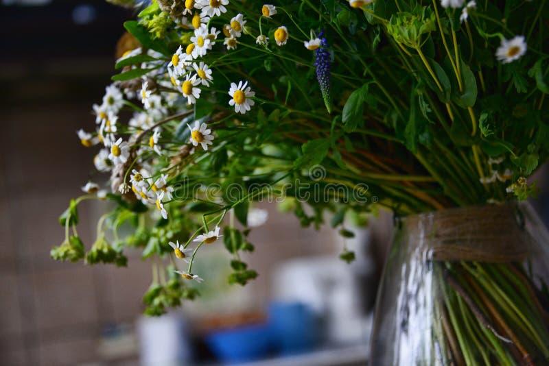 Ein Blumenstrauß der Feldkamille stockfotografie
