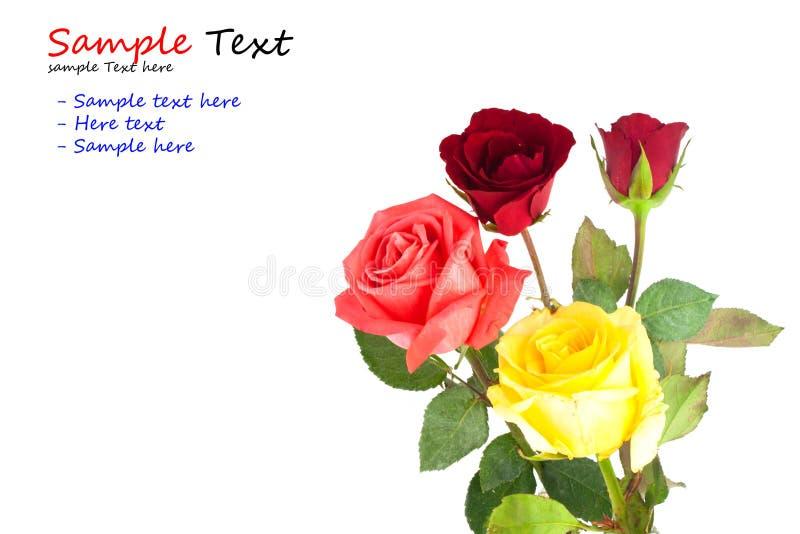 Ein Blumenstrauß der mehrfarbigen Rosen stockfotografie