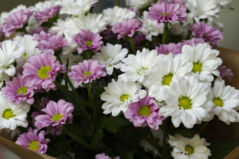 Ein Blumenstrauß der weißen und purpurroten Spraychrysantheme lizenzfreie stockfotos