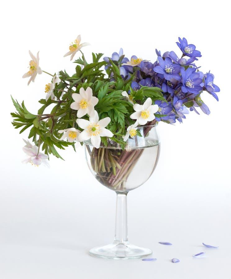 Ein Blumenstrauß des blauen hepatica und der weißen Anemone in einem Glasbecher lizenzfreie stockbilder
