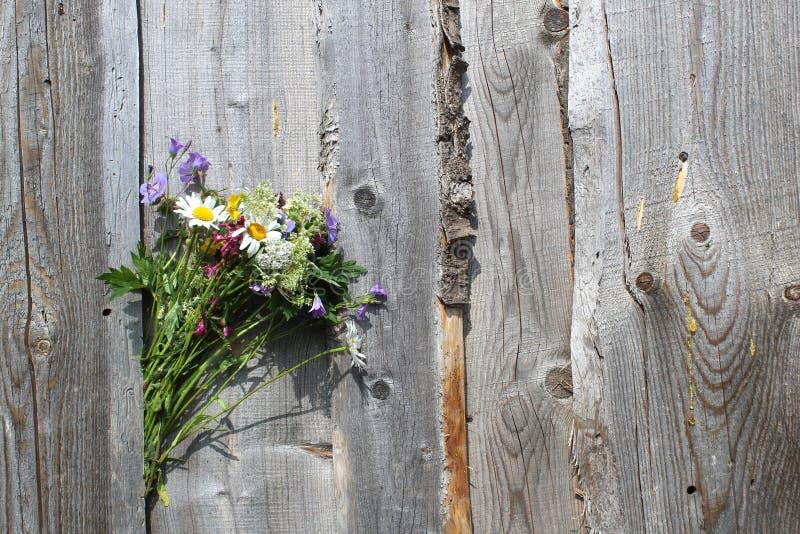 Ein Blumenstrauß von den wilden Blumen verstaut zwischen den Brettern auf dem Zaun stockfotos