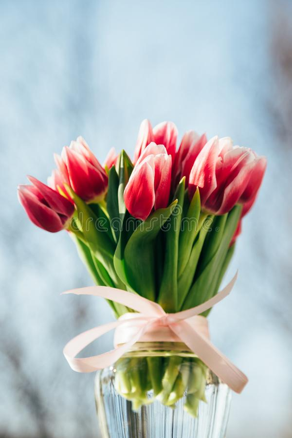 Ein Blumenstrauß von frischen rosa Tulpen in einem Glasvase draußen Beschneidungspfad eingeschlossen lizenzfreies stockbild