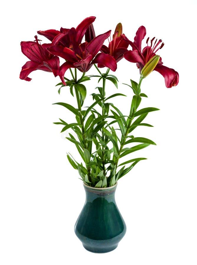 Ein Blumenstrauß von roten Taglilien in einem Vase Getrennt auf weißem Hintergrund stockfotografie