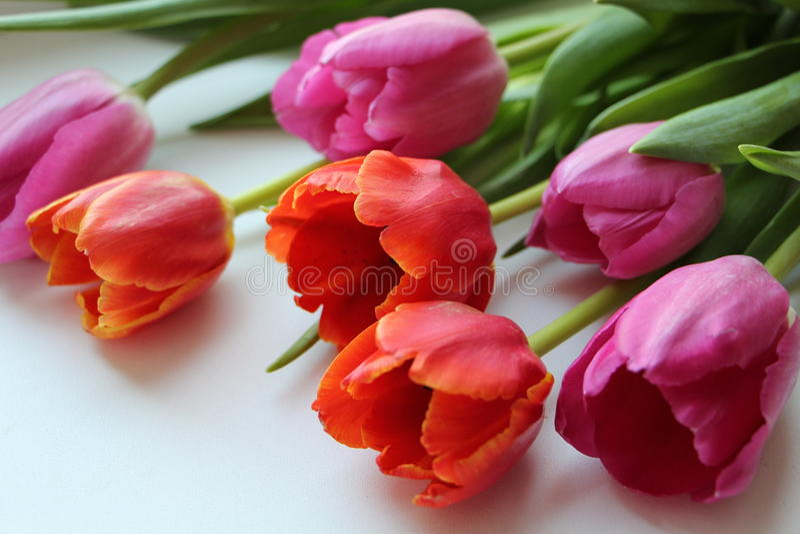 Ein Blumenstrauß von Tulpen von verschiedenen Farben stockbild