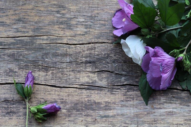 Ein Blumenstrauß von zwei purpurroten Blumen und von einer, die weiß sind, sowie zwei Pfand sind auf einem hölzernen Hintergrund stockfoto