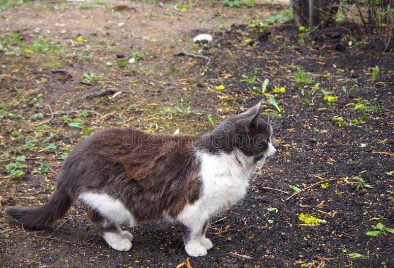 Ein Braun mit wei?er Katze geht auf die Stra?e lizenzfreies stockbild