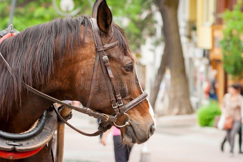 Ein braunes Pferd, das auf Krupowki steht lizenzfreies stockfoto