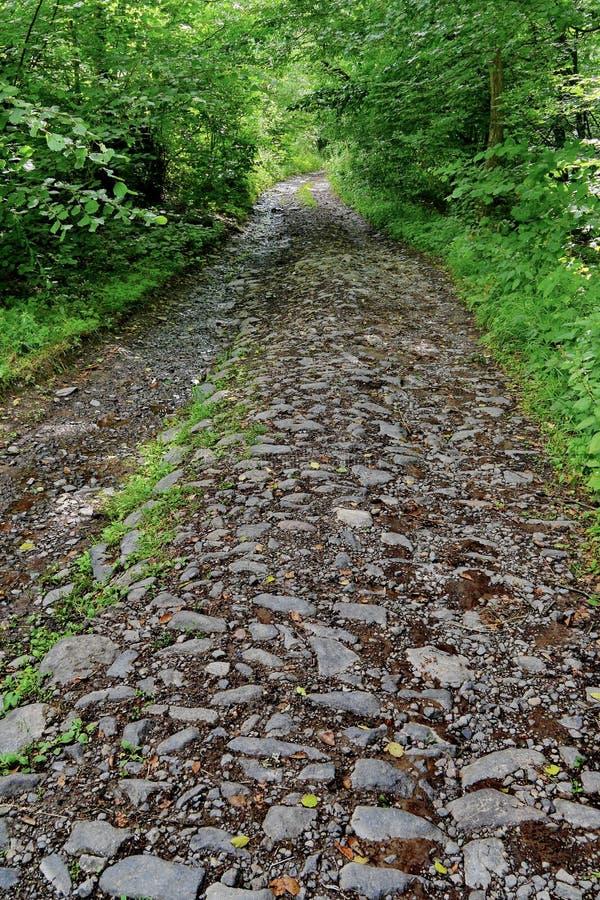 Ein breiter Steinwaldweg mit grünen Büschen und Bäumen auf jeder Seite stockfotos