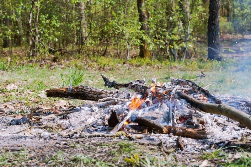 Ein brennendes Feuer im Wald, die Überreste des gebrannten Holzes lizenzfreie stockbilder