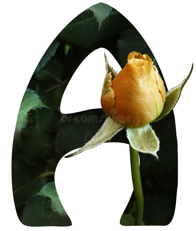 Ein Buchstabe von Alphabet A lokalisiert auf weißem Hintergrund mit Beschneidungspfad Gemacht vom natürlichen Blumenhintergrund M lizenzfreie stockbilder