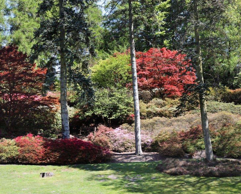 Ein bunter englischer Park im Frühjahr lizenzfreie stockbilder