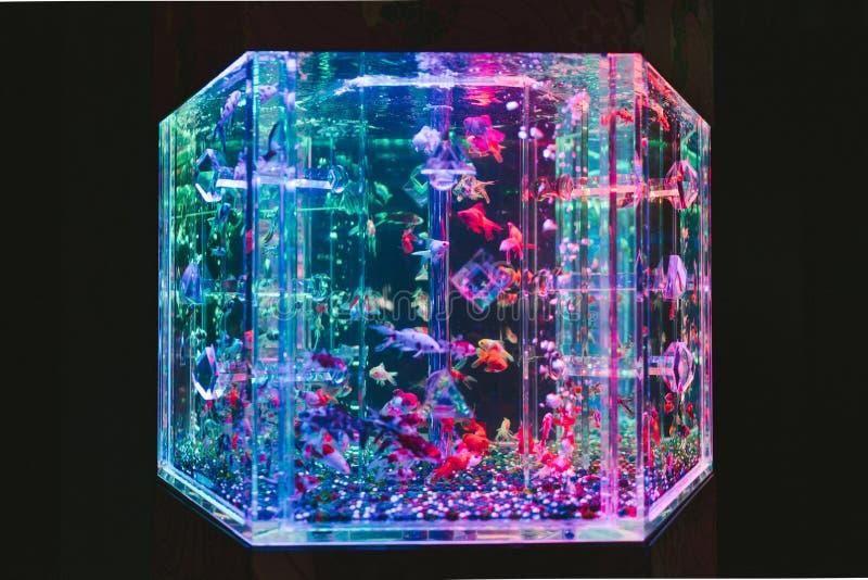 Ein buntes LED-Aquarium stockbilder
