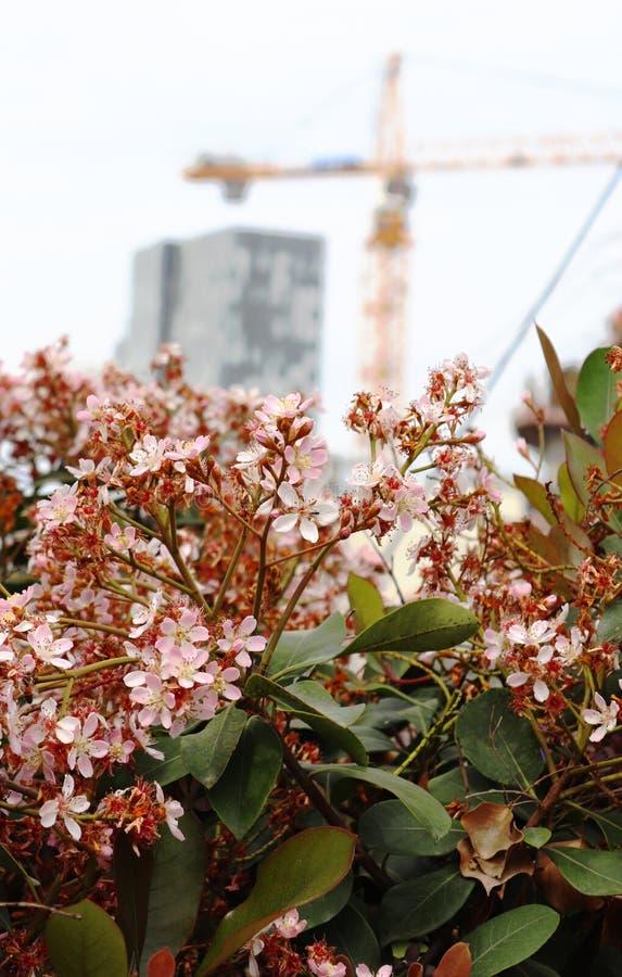 Ein Busch mit rosa Blumen lizenzfreies stockbild