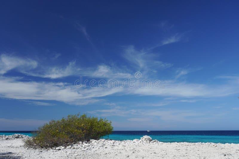 Ein Busch wächst auf einem felsigen Strand in Bonaire, eine Insel in den Karibischen Meeren lizenzfreies stockfoto