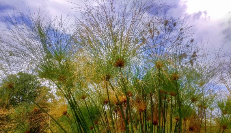 Ein dünner Garten mit einem blauen Himmel stockfotos