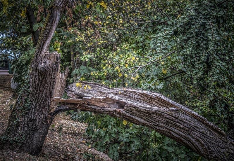 Ein defekter Baum im Herbst lizenzfreie stockfotografie