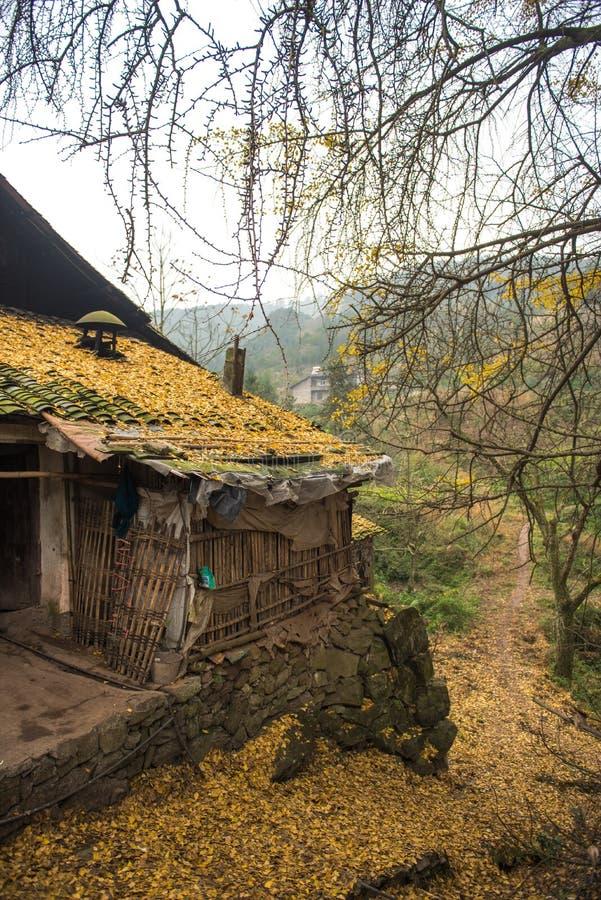 Ein Dorf mit voll von gefallenen Blättern lizenzfreie stockbilder