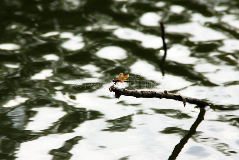 Ein Drache im Teich lizenzfreie stockbilder