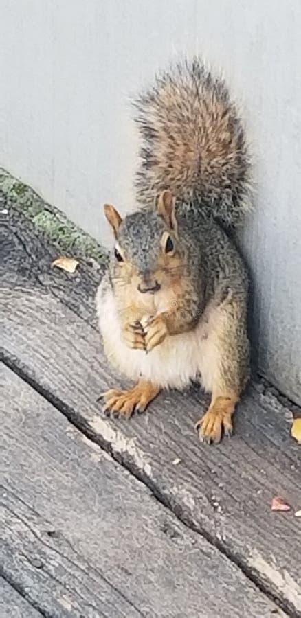 Ein Eichhörnchen stockbilder