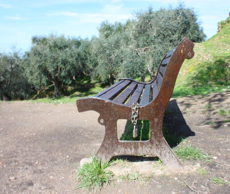 Ein einsamer allgemeiner Park an einem schönen Frühlingstag eine Holzbank steht im grünen Garten nahe bei einem Olivenhain still  stockbilder