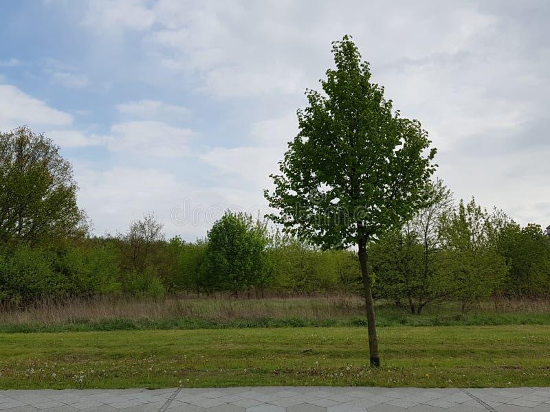 Ein einsamer Baum am Abend lizenzfreie stockfotos