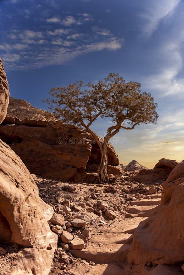 Ein einsamer Baum auf einen felsigen Berg lizenzfreie stockfotografie